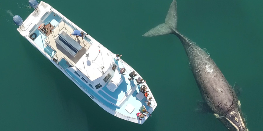 Hermanus Whale Watching Trips - Perpose Build Boat Based Whale Watching Boat - The Ivanhoe