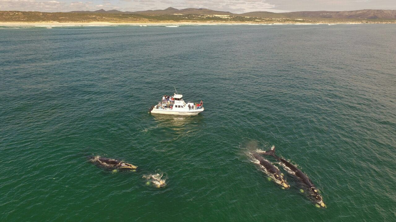Shark and Whale Combo trip - This is whales next to Ivanhoe
