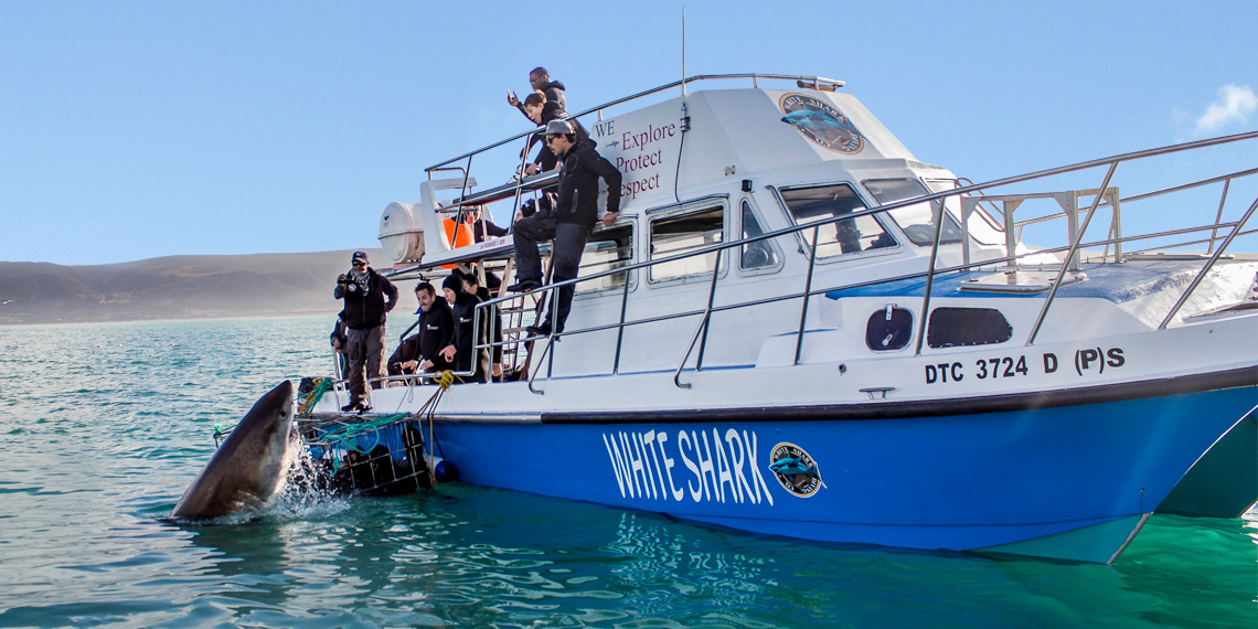 Shark and Whale combo trip with Ivanhoe Sea Safaris