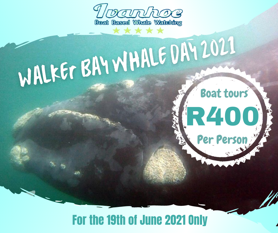 2021 Whale Season - Welcome the Whales