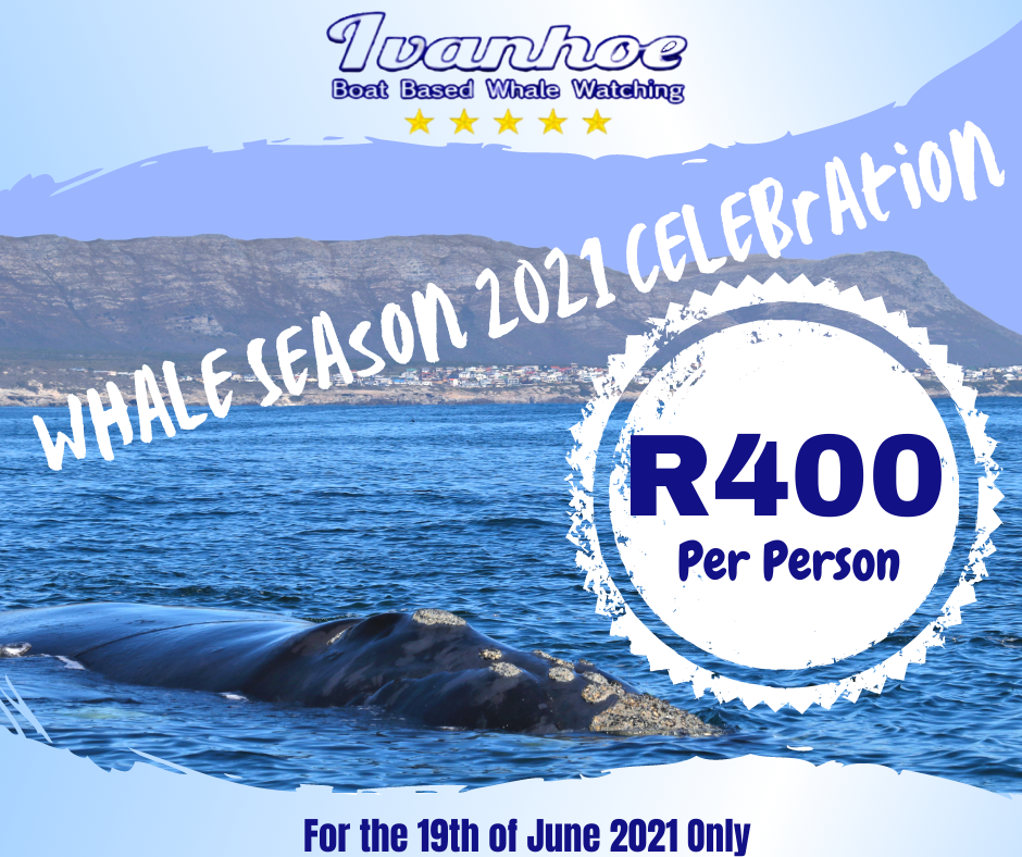 2021 Whale Season - One Day Whale Special R400