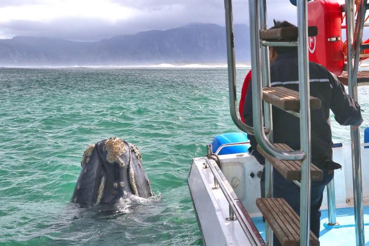 2021 Whale Season Starts
